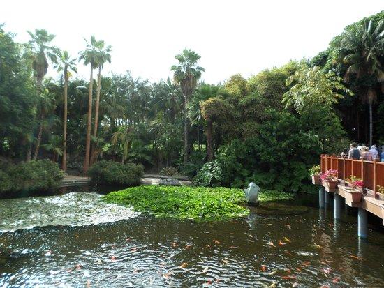 Pez escorpion en el acuario picture of loro parque puerto de la cruz tripadvisor - Loro parque puerto de la cruz ...