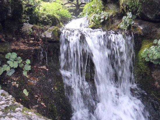 Jardin botanique Alpin de la Jaysinia : Water feature