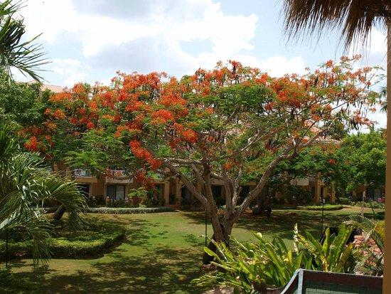 Viva Wyndham Dominicus Palace : mooie tuin
