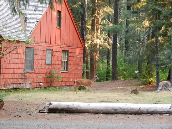 Union Creek Resort: Resident deer on the property