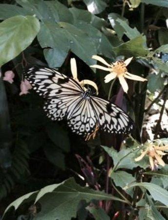 Butterfly Rainforest: Beautiful butterfly