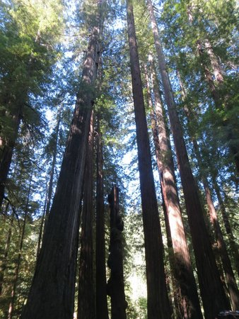 Avenue of the Giants: You have to look up!
