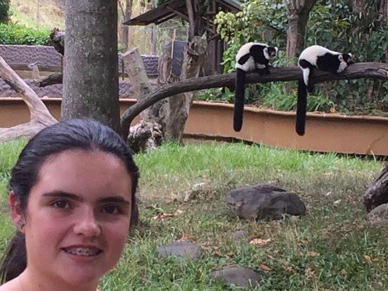 Zoologico de Cali: Juli y los lemures