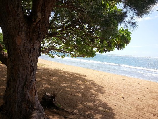 Courtyard Kaua'i at Coconut Beach: a relaxing view from under the shade of a tree.