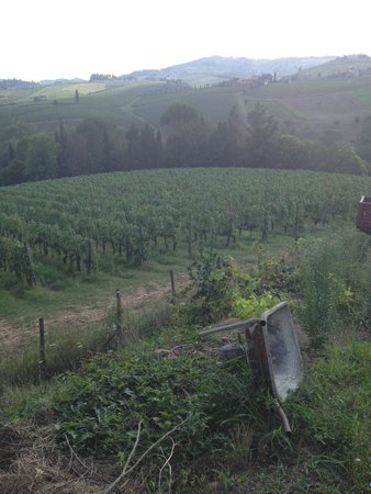 Tuscan Wine Tours by Grape Tours : Winery