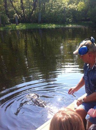 Atchafalaya Basin Landing & Marina- Swamp Tours: Mr. Kirk Guidry calling the gator