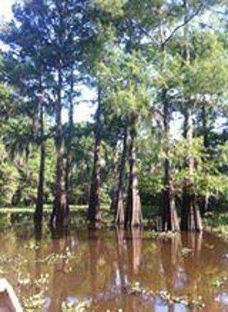 Atchafalaya Basin Landing & Marina- Swamp Tours: Cypress swamp