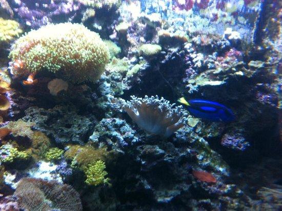 Texas State Aquarium: Nemo y Doris!!