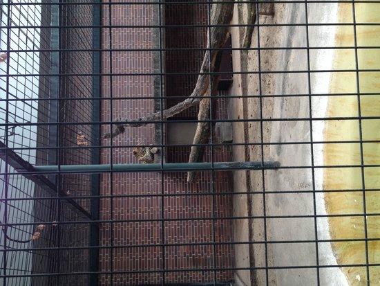 Berlin Zoological Garden : Very small cat enclosure :(