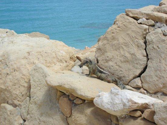 Hotel R2 Pajara Beach: Petits compagnons de plage