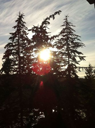 WorldMark Deer Harbor: Sunset through the stunning tree tops