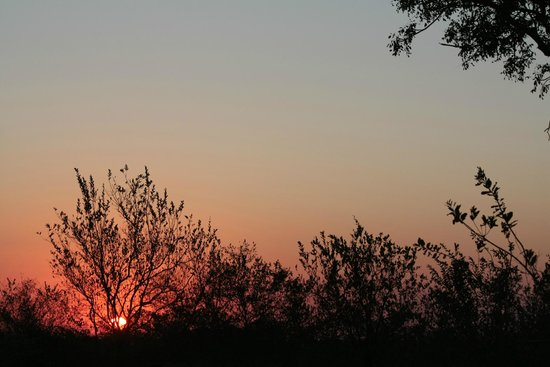 Shindzela Tented Camp: Zonsondergang in het veld