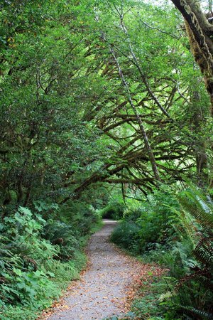 Redwood National Park: Down the path through the forest