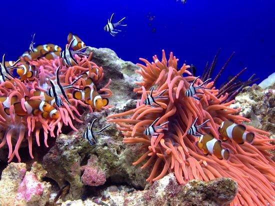 """Acquario di Genova: Pesci """"Nemo"""" -iphone"""
