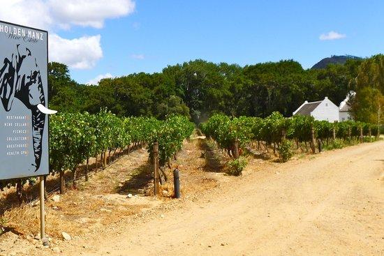 Franschhoek Wine Tram: Vineyards