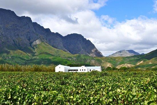 Franschhoek Wine Tram: Holden Manz Wine Estate