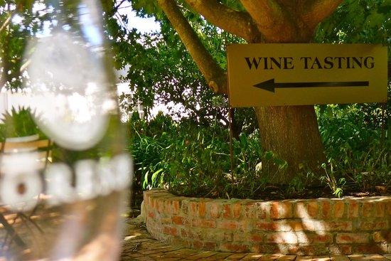 Franschhoek Wine Tram: Moreson vineyards
