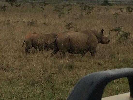 Nairobi Tented Camp: rhinois