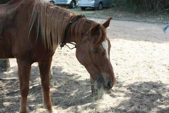 Bhangazi Horse Safaris: een van de paarden