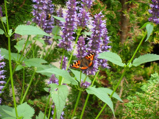Iford Manor: The Peto Garden: We saw many butterflies