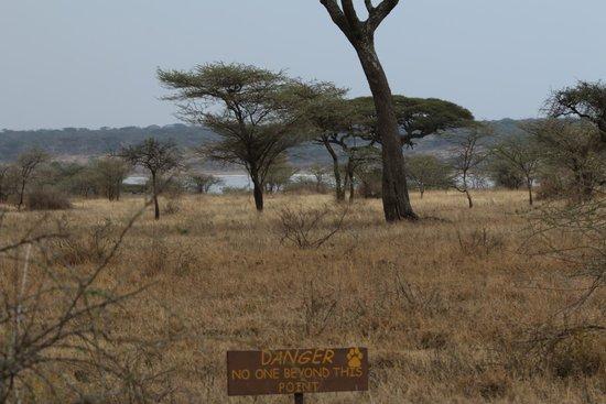 Ndutu Safari Lodge: Vue depuis les chambres