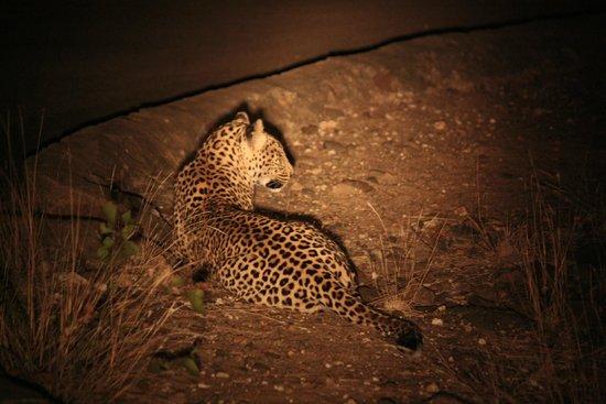 Letaba Rest Camp : Nightdrive met luipaard!!!