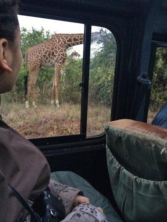 Nairobi Tented Camp: safari