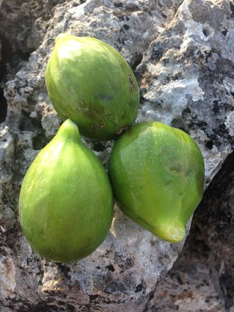 Fuoridalmondo: fichi freschi