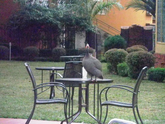 Silver Springs Hotel: Turkey - there are 2 of them that make life interesting