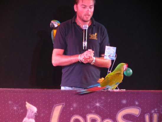 Hotel Los Patos Park: Parrot show in hotel