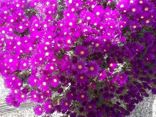 Trewidden Garden: Summer Flowering Plants In The Walled Garden