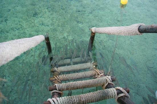 Iberostar Cozumel: fish at the dock