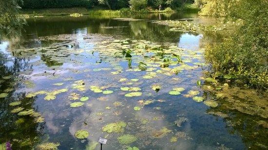 Bennetts Water Gardens: views - various