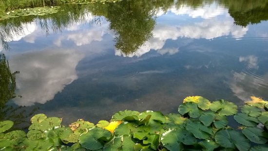 Bennetts Water Gardens: reflection of clouds