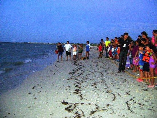 Hotel Reef Yucatan - All Inclusive & Convention Center : Liberación de tortuguitas