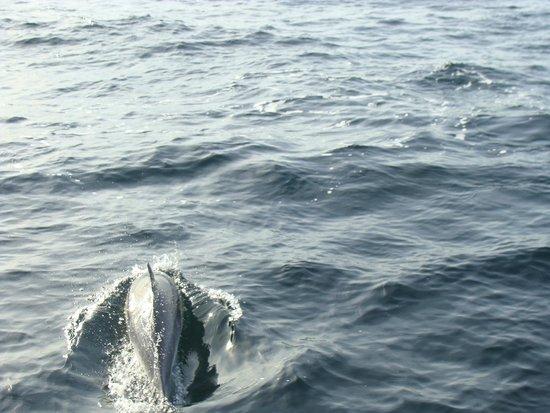 Bruny Island Cruises: golfinhos próximos ao barco