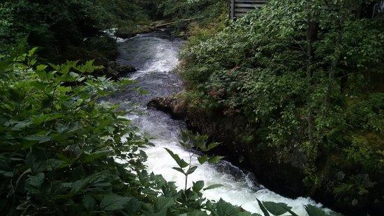 Creek Street: waterfall where salmon swim upstream!