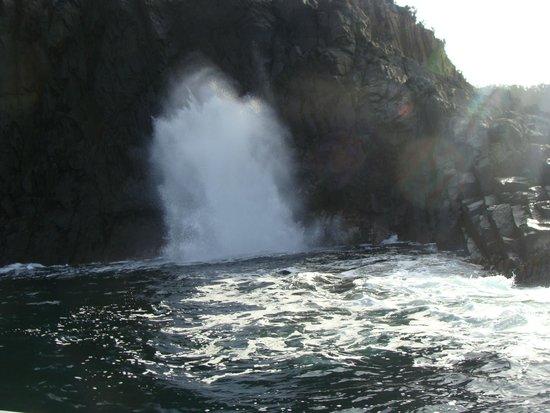 Bruny Island Cruises: Jorro de água