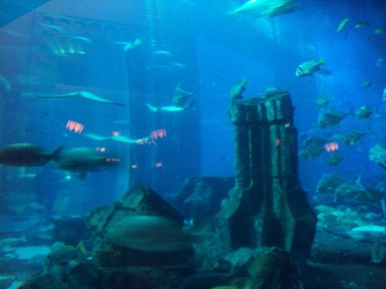 Atlantis, The Palm: acquario