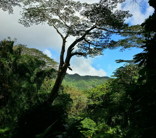 Manoa Falls : Looking through the trees up to the mountains.