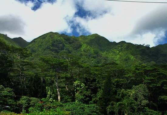 Manoa Falls: Views from the start of the trail