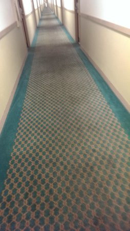 Extended Stay America - St. Louis - Westport - Craig Road: hallway carpet