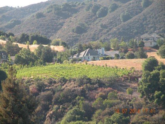 Picchetti Winery: Окресности