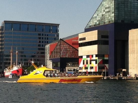 Baltimore Water Taxi: Seadogs