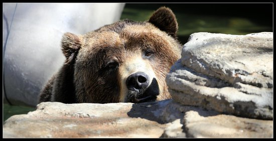 Denver Zoo: Peek-a-Boo