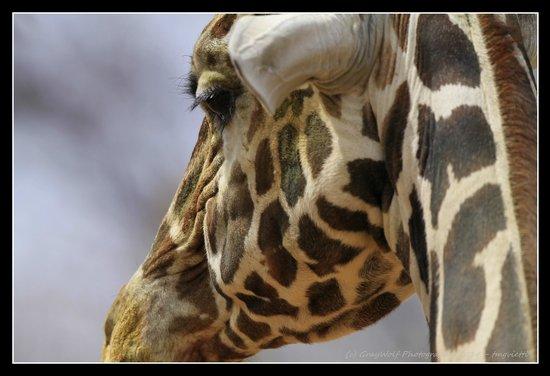 Denver Zoo: Profile
