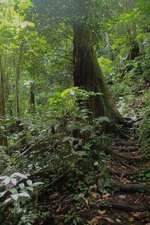 Vermont Nature Trail: trail