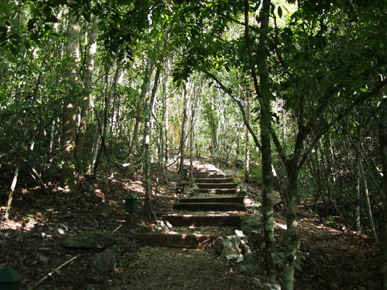 The Lodge at Chaa Creek: Path to Spa Villa from the main grounds