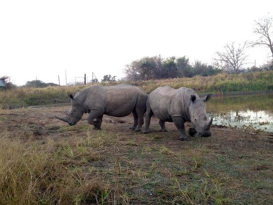 Elandela Private Game Reserve : Rinocerontes Elandela