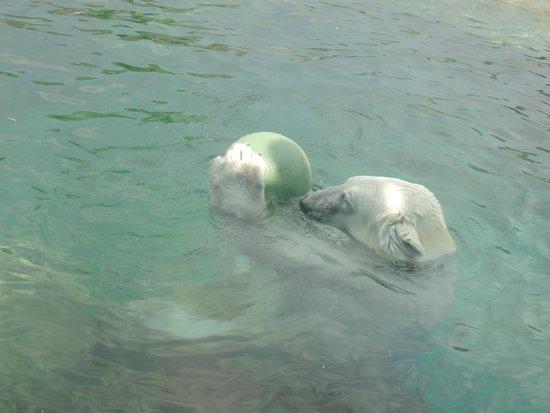 Tiergarten Schoenbrunn - Zoo Vienna: Der spielte mit einem wahnsinns Elan